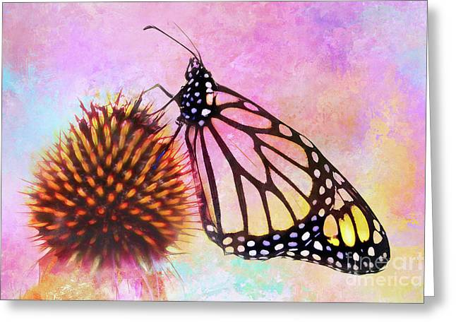Monarch Butterfly On Coneflower Abstract Greeting Card