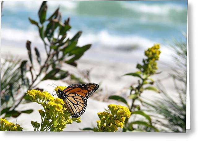 Monarch By The Sea Greeting Card by Tom LoPresti