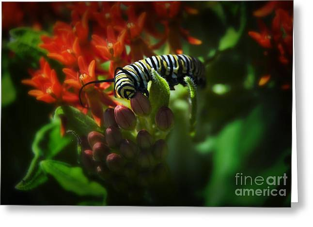 Monarch Greeting Card by Fred Lassmann