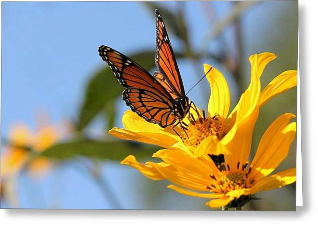 Monarch Golden Moment Greeting Card