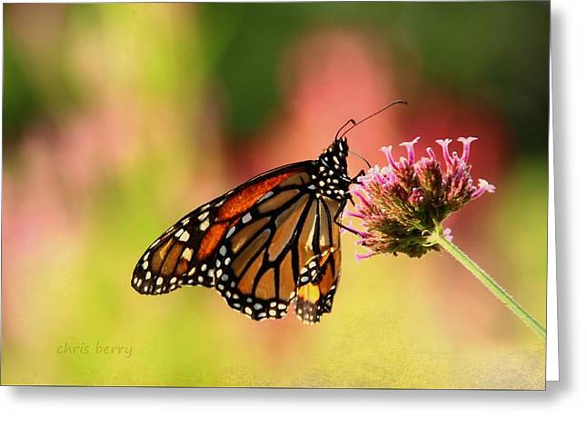 Monarch In Summer Greeting Card by Chris Berry