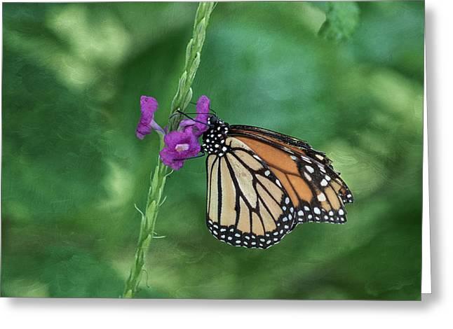 Monarch In The Garden Greeting Card by Kim Hojnacki