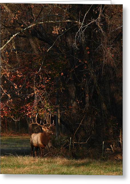 Greeting Card featuring the photograph Monarch Joins The Rut by Michael Dougherty