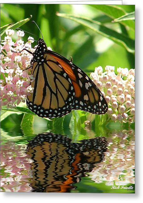 Greeting Card featuring the photograph Monarch Lunch by Rick Friedle