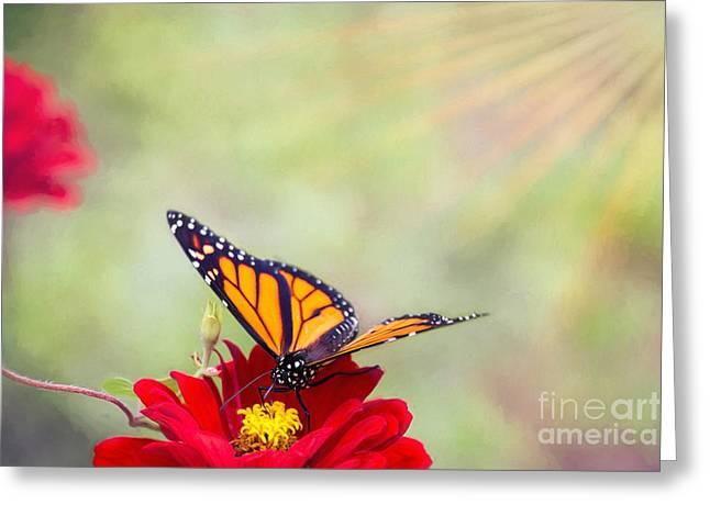 Monarch Magic Greeting Card