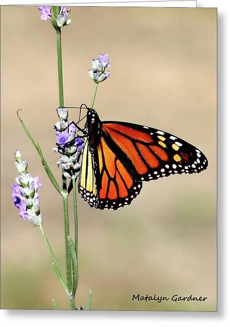 Monarch Greeting Card