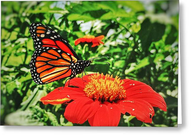 Greeting Card featuring the photograph Monarch Of The Flowers  by Jame Hayes