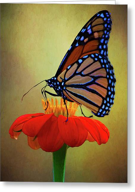 Greeting Card featuring the photograph Monarch On A Mexican Sunflower by Chris Lord
