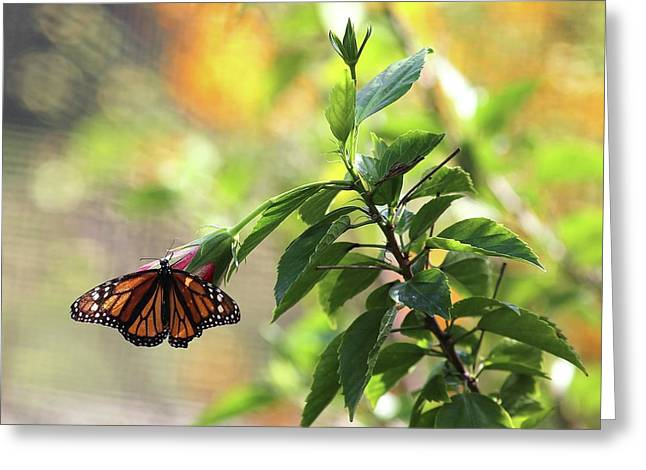 Greeting Card featuring the photograph Monarch On Blossom by Ellen Barron O'Reilly