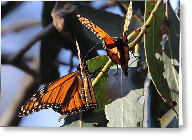 Monarch On Eucalyptus Greeting Card