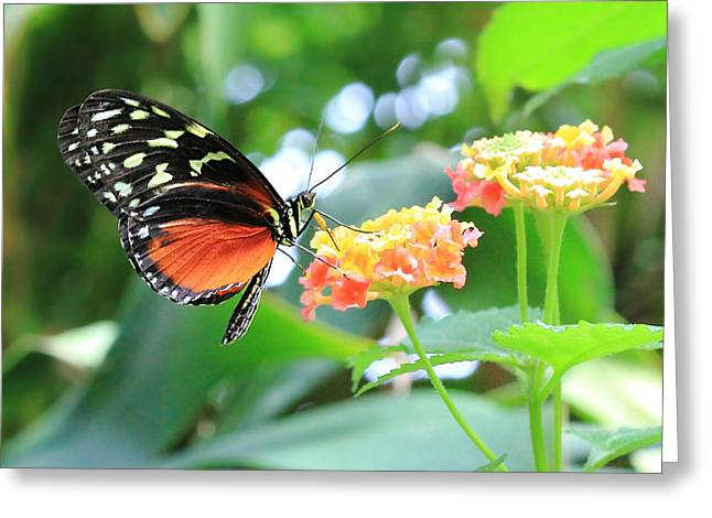 Monarch On Flower Greeting Card