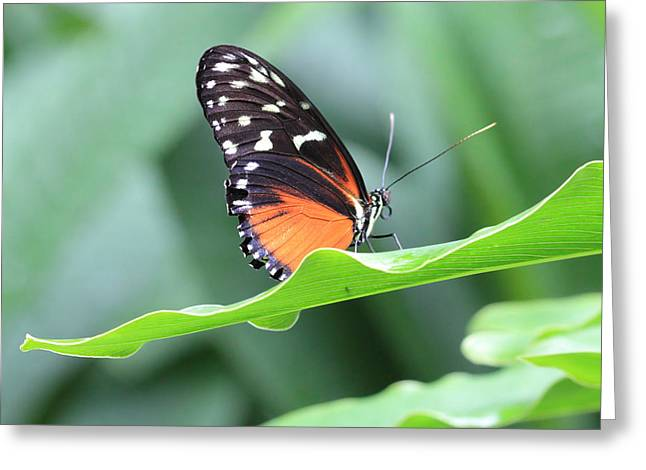 Monarch On Green Leaf Greeting Card