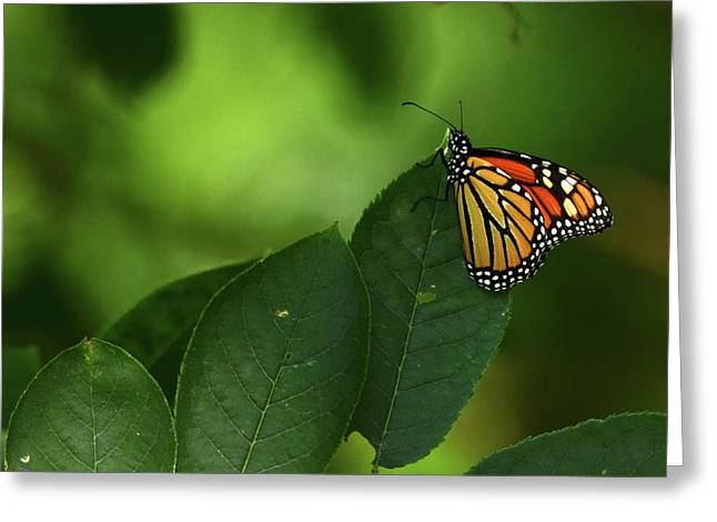 Greeting Card featuring the photograph Monarch On Leaf by Ann Bridges