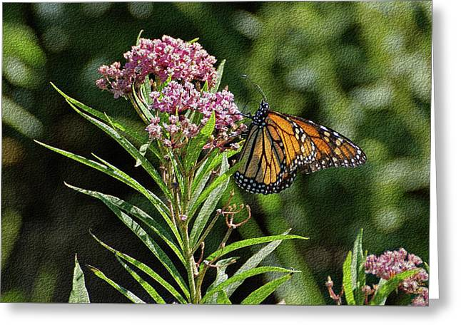 Greeting Card featuring the photograph Monarch On Milkweed by Sandy Keeton