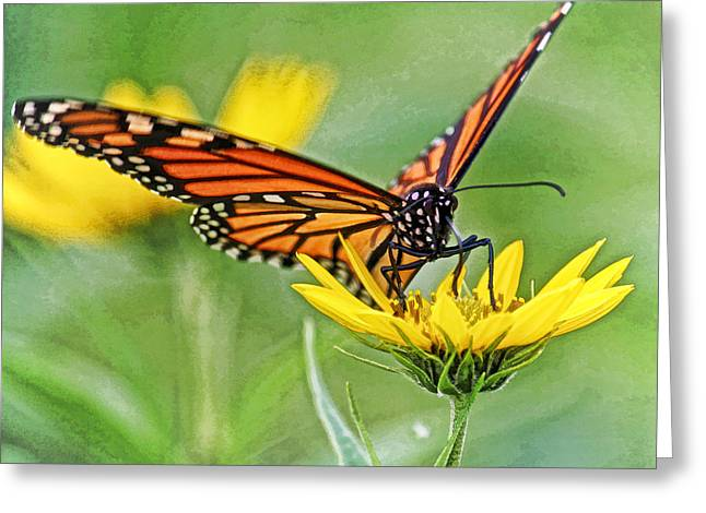 Monarch On Sunflower Dwc Greeting Card by Kevin Anderson