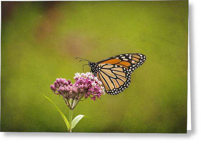 Monarch On Swamp Milkweed 2014-2 Greeting Card by Thomas Young