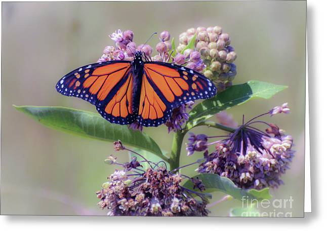 Greeting Card featuring the photograph Monarch On The Milkweed by Kerri Farley