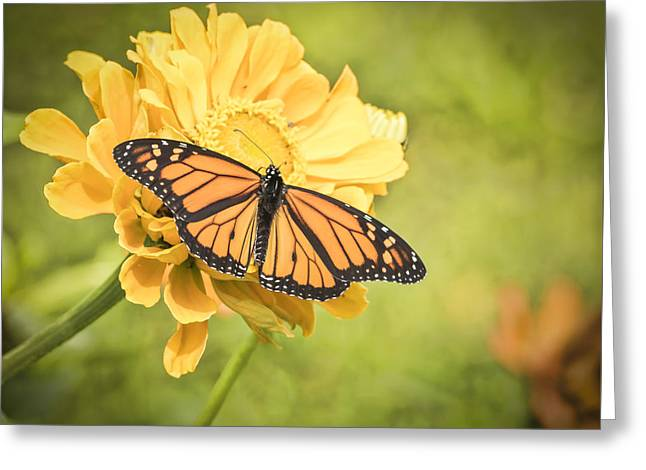 Monarch On Zinnia 5-2015 Greeting Card