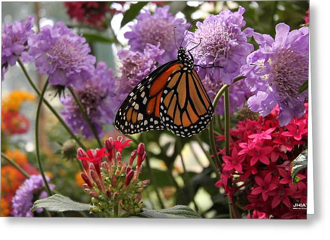 Monarch Playground Greeting Card