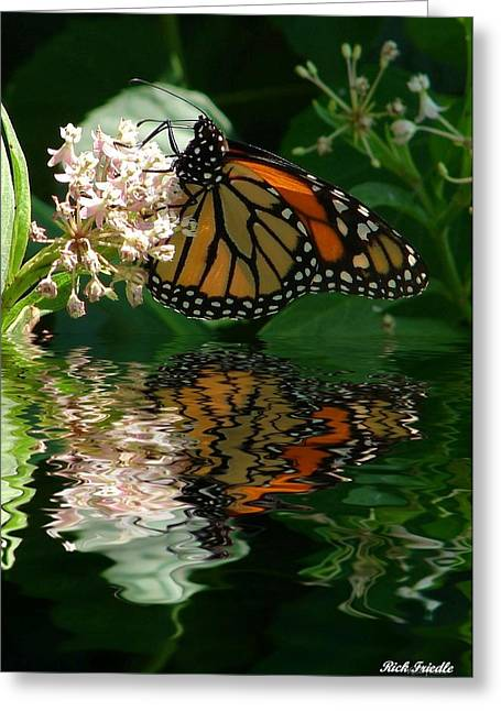 Greeting Card featuring the photograph Monarch Reflection by Rick Friedle