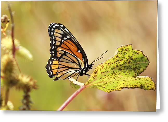 Greeting Card featuring the photograph Monarch by Rick Friedle