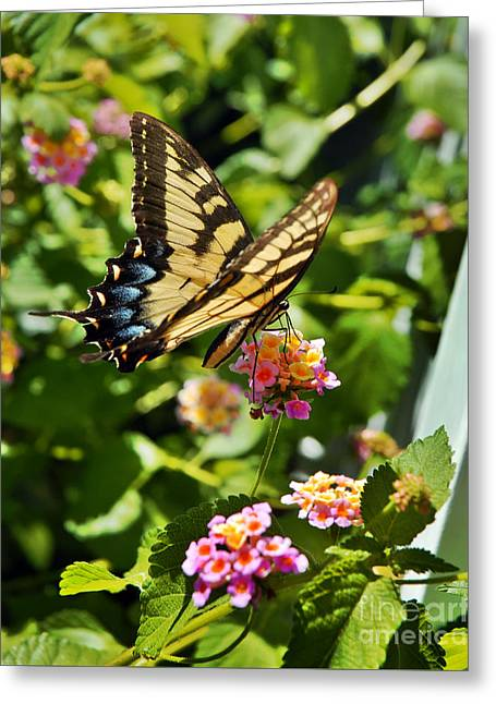 Monarch Summer Greeting Card by Jeff McJunkin