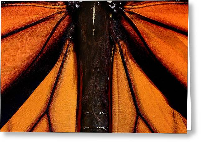Monarch Wings Greeting Card by Thomas Morris