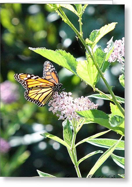 Monarch1 Greeting Card