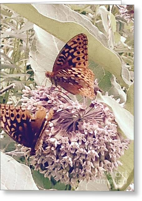 Monarch's On Milkweed Greeting Card