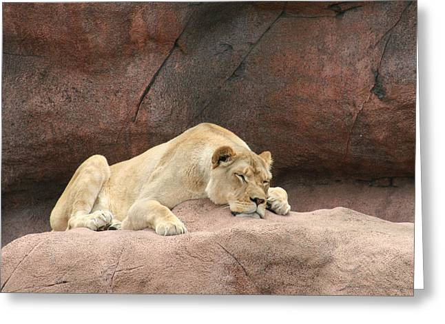 Lazing Greeting Cards - Monday Greeting Card by David Barker