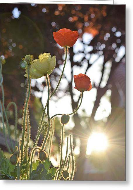 Monday Morning Sunrise Greeting Card by John Glass