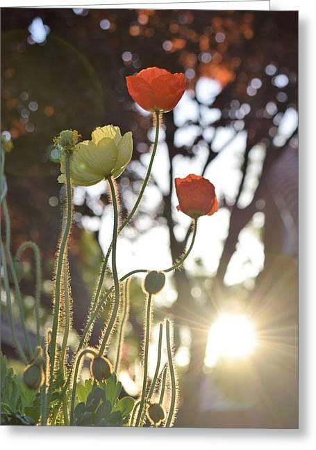 Monday Morning Sunrise Greeting Card