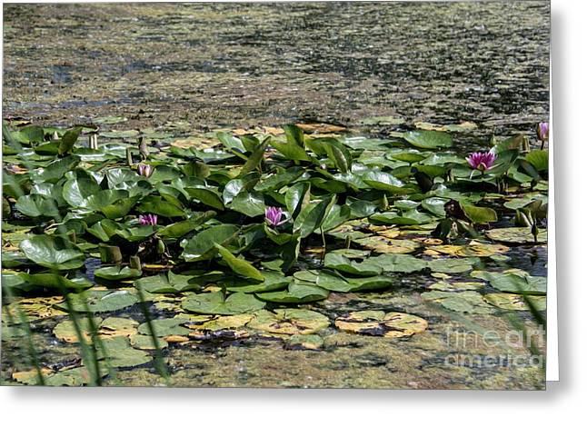 Monet At Giverny - 2 Greeting Card