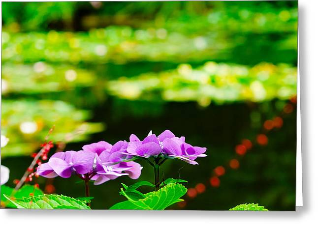Monet's Purple Lace Hydrangeas  Greeting Card by MaryJane Armstrong