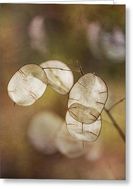 Money Plant Greeting Card by Dale Kincaid