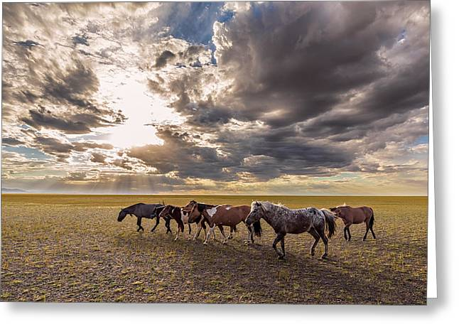 Greeting Card featuring the photograph Mongolian Horses by Hitendra SINKAR