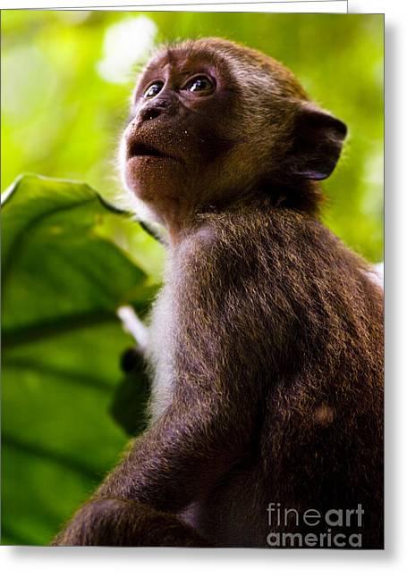 Monkey Awe Greeting Card