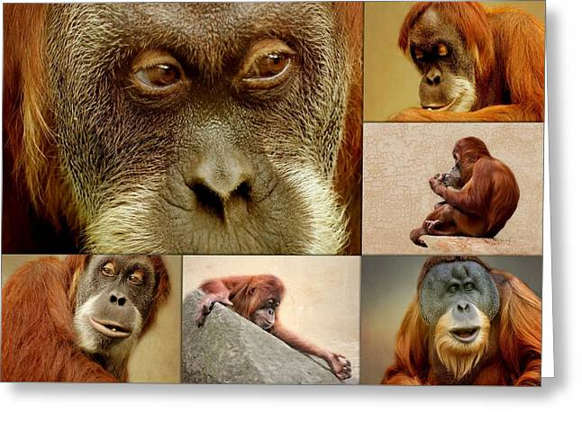 Monkey Collage Greeting Card by Heike Hultsch