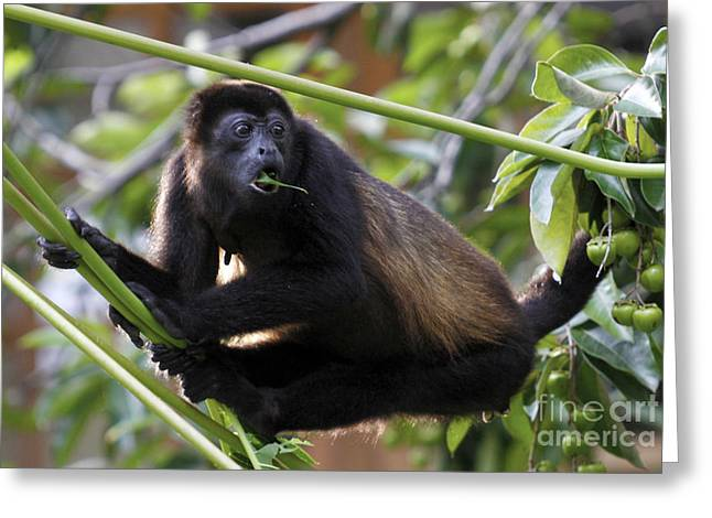 Monkey Still Surprised Greeting Card by Mopics