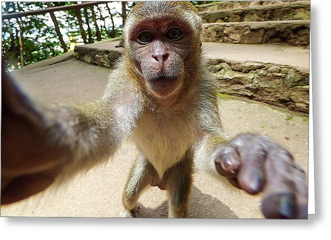 Monkey Taking A Selfie Greeting Card