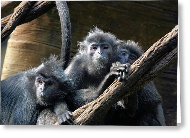 Monkey Trio Greeting Card by Karol Livote