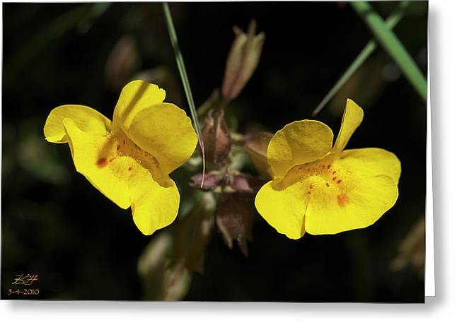 Monkeyflowers Greeting Card