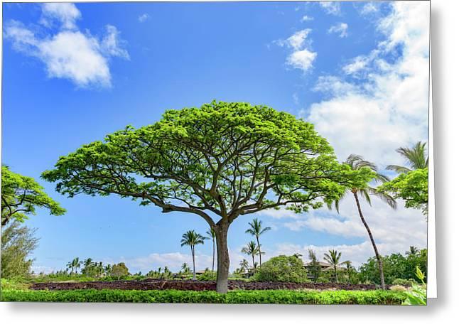 Monkeypod Tree 1 Greeting Card