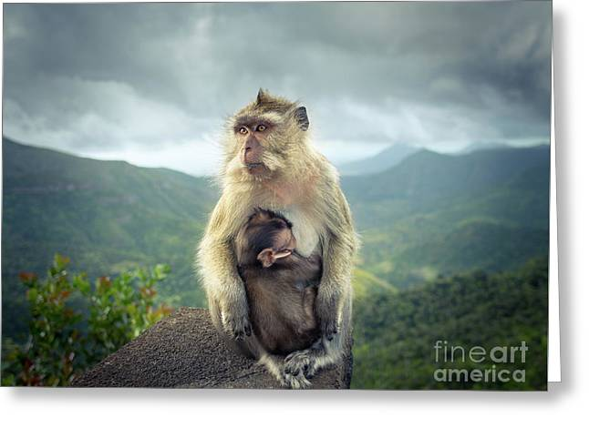 Monkeys At The Gorges Viewpoint. Mauritius.  Greeting Card
