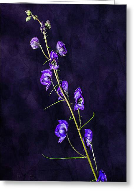 Monkshood Version 2 Greeting Card