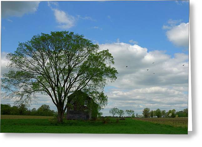 Greeting Card featuring the photograph Monmouth Battlefield by Steven Richman