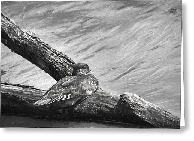 monochrome Artistic Resting on log female mandarin duck laying on a log an Greeting Card by Leif Sohlman