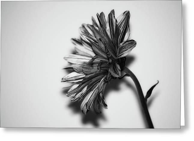 Monochrome Flower Greeting Card by Martin Newman