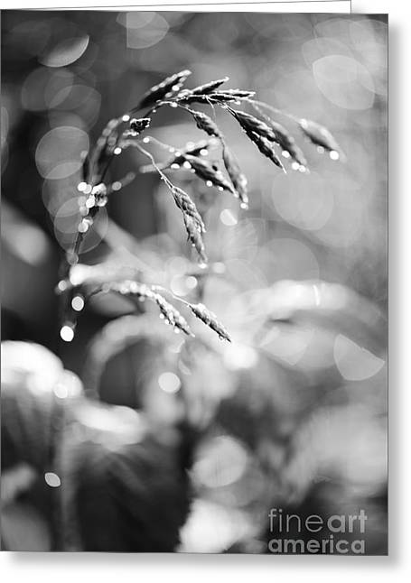 Monochrome Grass Abstract Greeting Card by Arletta Cwalina
