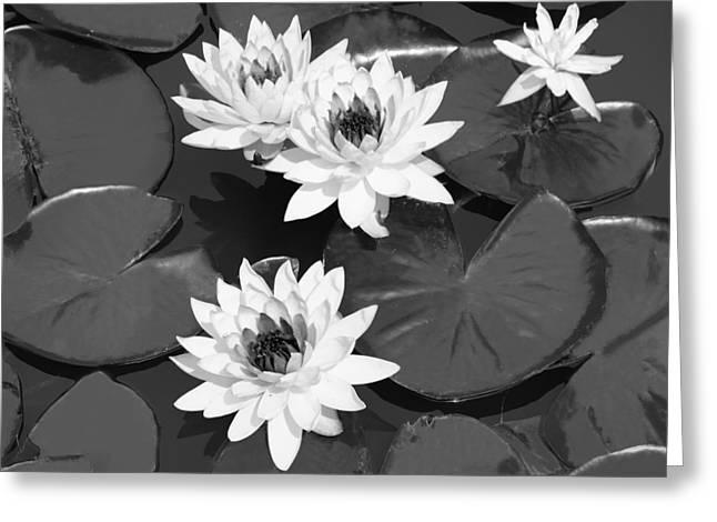 Monochrome Lilies Greeting Card by Milena Ilieva